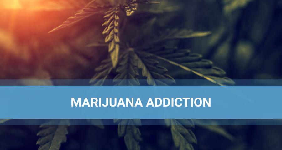Cannabis Bush And The Sunglare